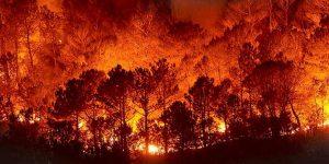 Incendios forestales, resultado de la negligencia presupuestal