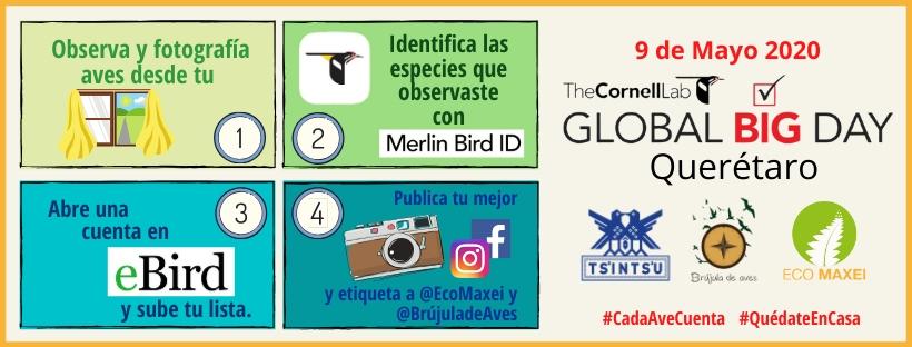 Global Big Day Querétaro 2020