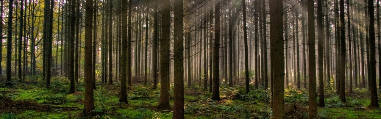 bosques1920x1080