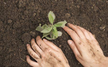 primer-plano-mano-persona-plantando-plantulas-suelo_23-2147948275